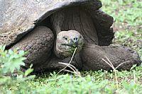 Santa Cruz, Turtle