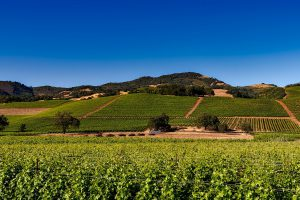 California Wine Country Tailor Made Journey