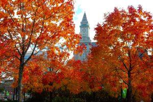 Boston Autumn Colors