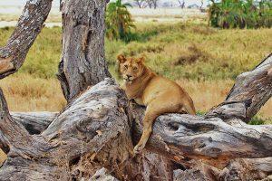 Serengeti, Tanzania - African Travel